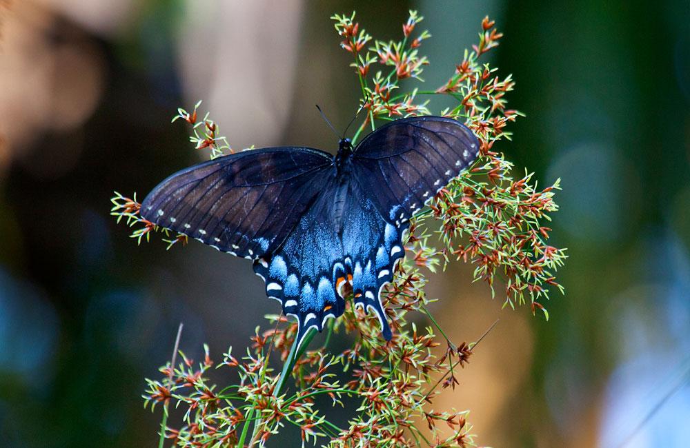 Beautiful Butterflies of the world | Dirty Hands Inc.  Beautiful Butte...